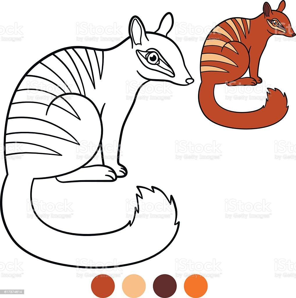 Coloring Page Little Cute Numbat Smiles stock vector art 617374614