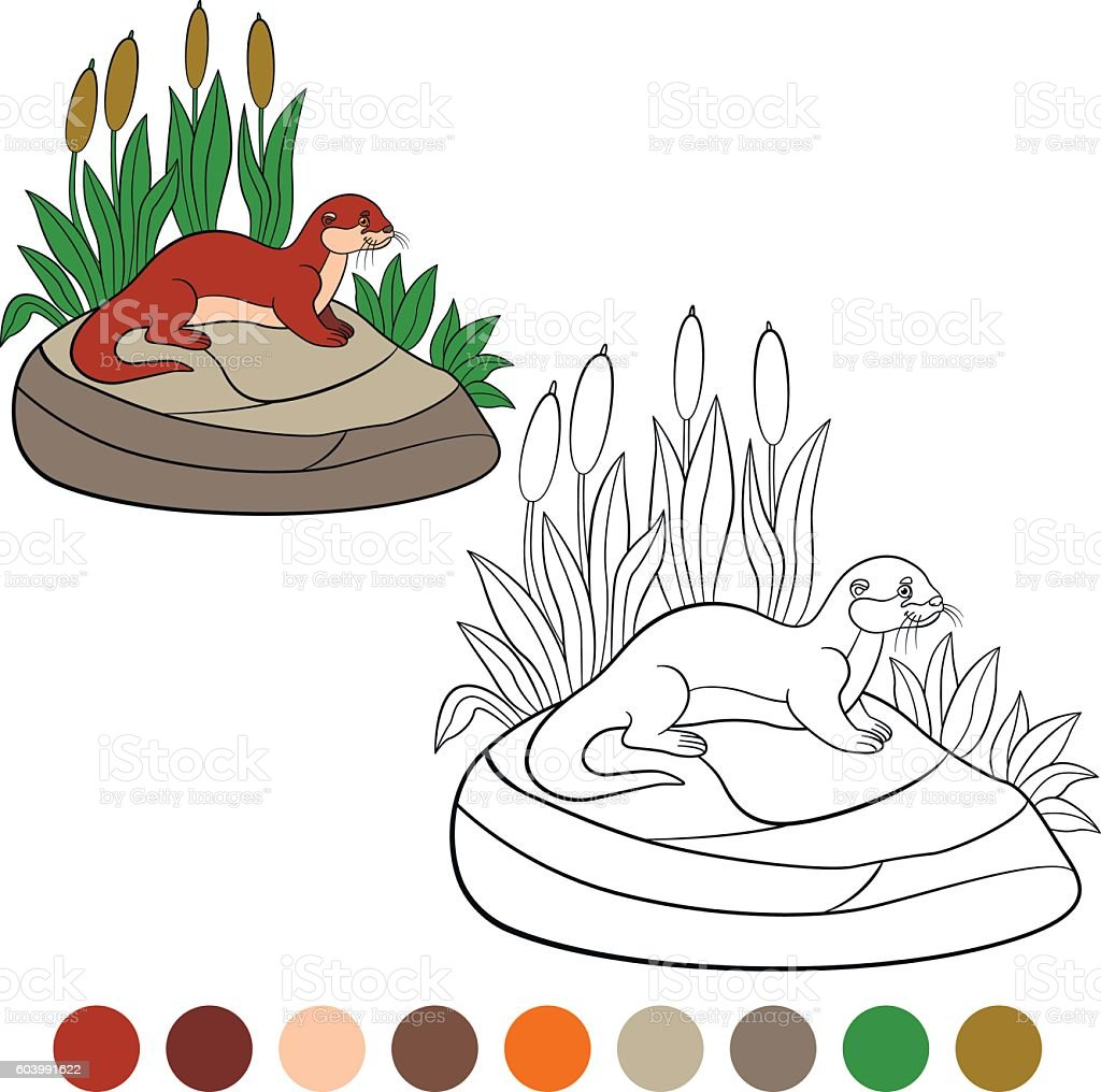 Coloring page. Little cute otter stands on the stone. vector art illustration
