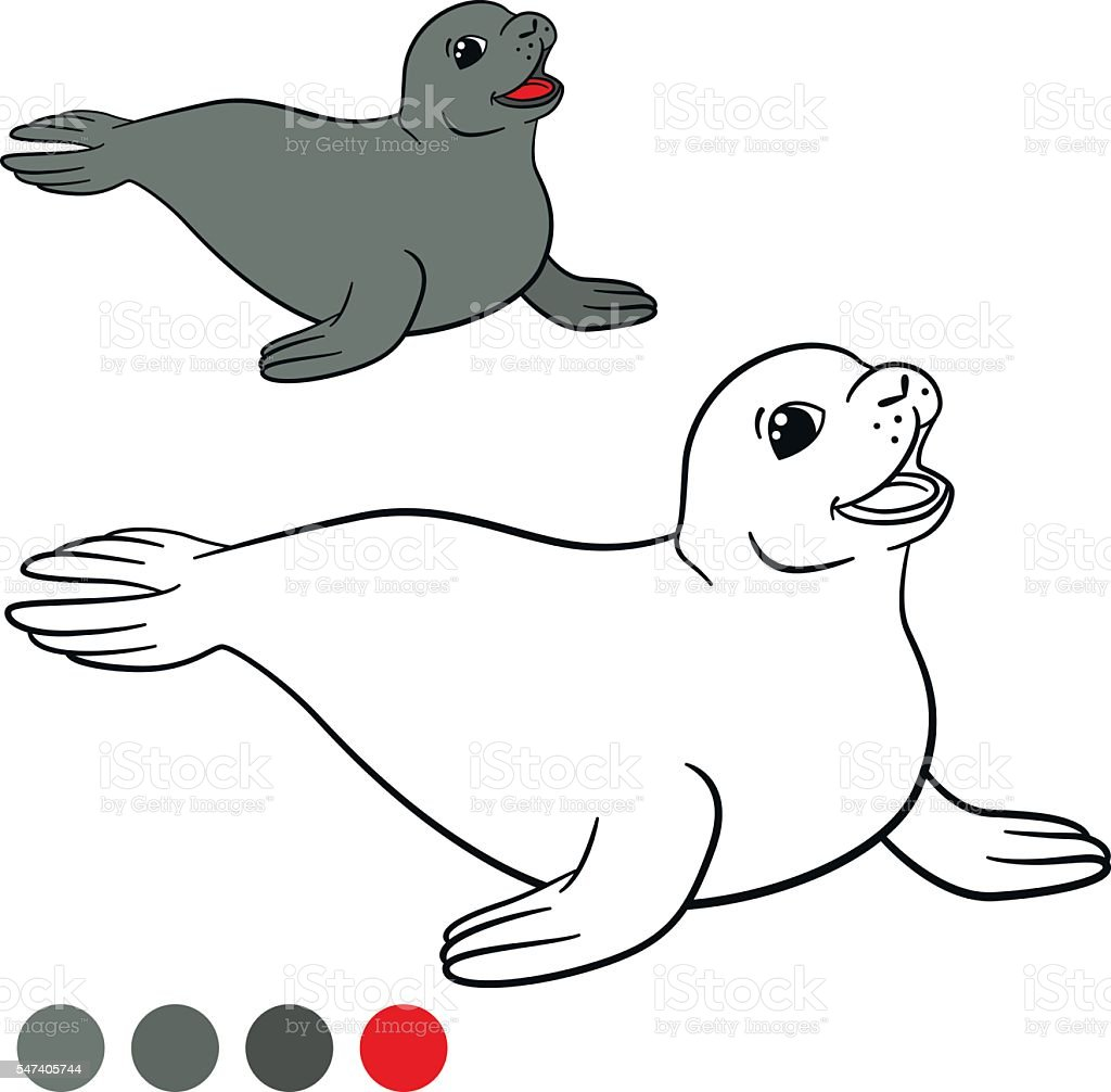 coloring page with colors little cute gray seal stock vector art