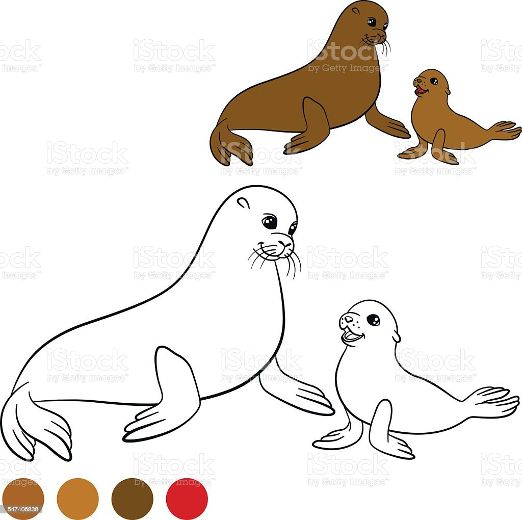 coloring page with colors mother fur seal with her baby stock