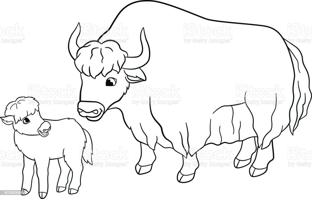 Coloring Pages Beautiful Yak With Little Baby Royalty Free Stock Vector Art