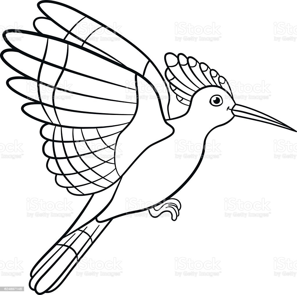 coloring pages cute beautiful hoopoe flies stock vector art