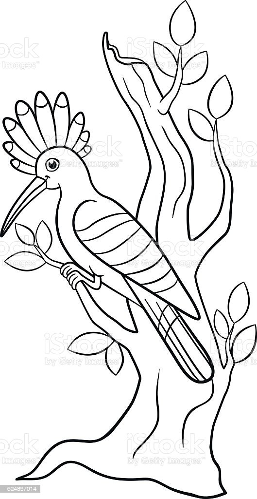 Coloring Pages Cute Beautiful Hoopoe Sits On The Tree Branch stock