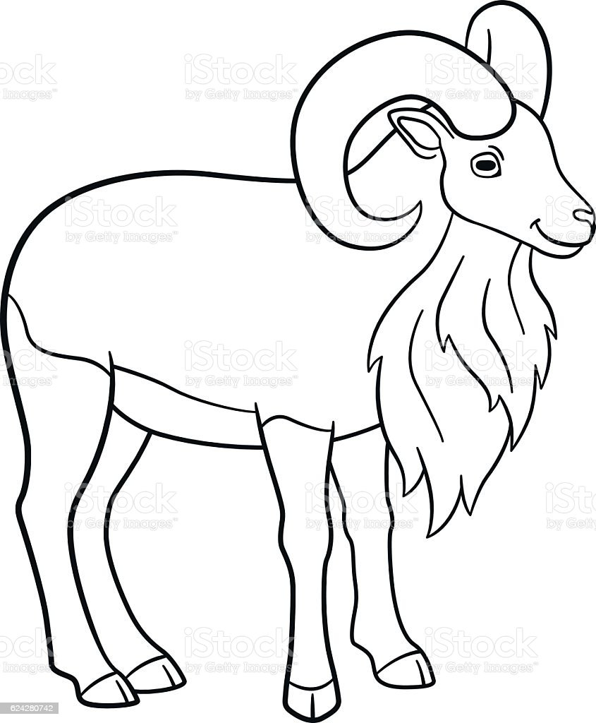 coloring pages cute beautiful urial with big horns stock vector