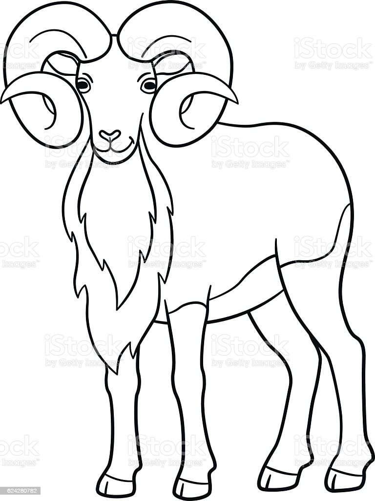 coloring pages cute beautiful urial with huge horns stock vector