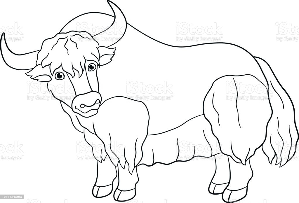 Coloring Pages Cute Beautiful Yak Smiles Royalty Free Stock Vector Art