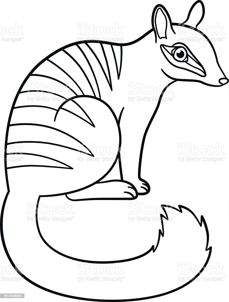 Coloring Pages Little Cute Numbat Sits stock vector art 614026082