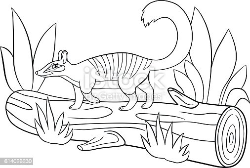 Coloring Pages Little Cute Numbat Walks On The Log stock vector