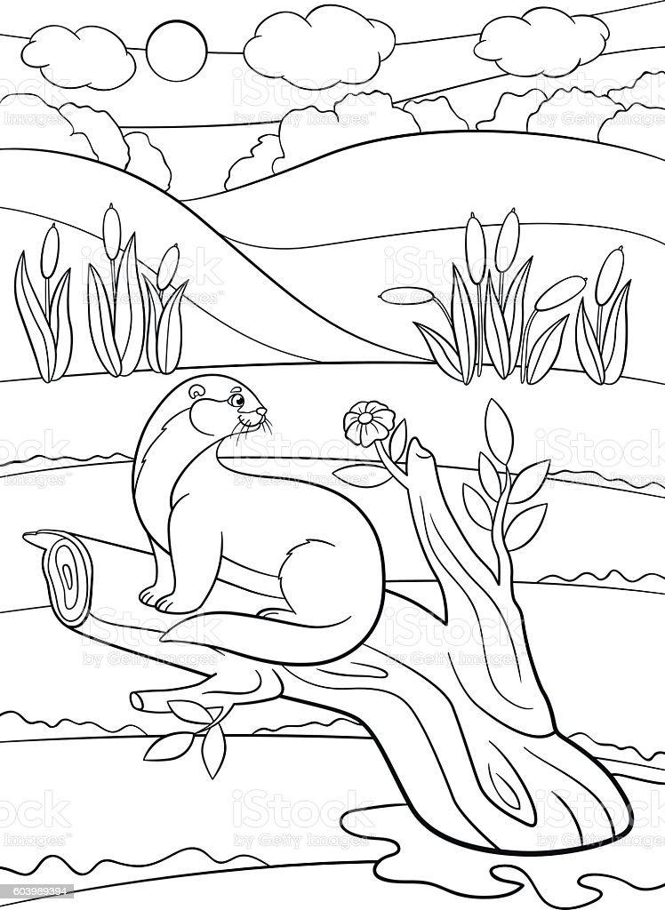 Coloring pages. Little cute otter sits on the tree branch. vector art illustration