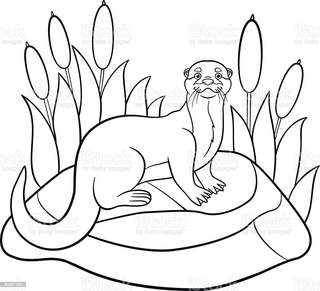 Coloring Pages Little Cute Otter Stands On The Stone stock vector