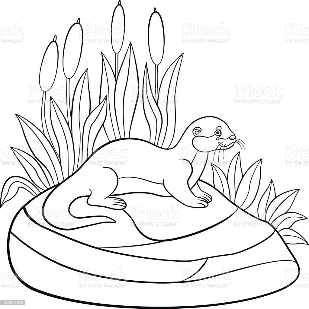 Coloring pages. Little cute otter stands on the stone. vector art illustration