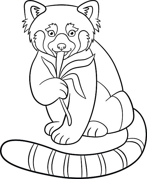 red panda coloring pages | Red Panda Clip Art, Vector Images & Illustrations - iStock