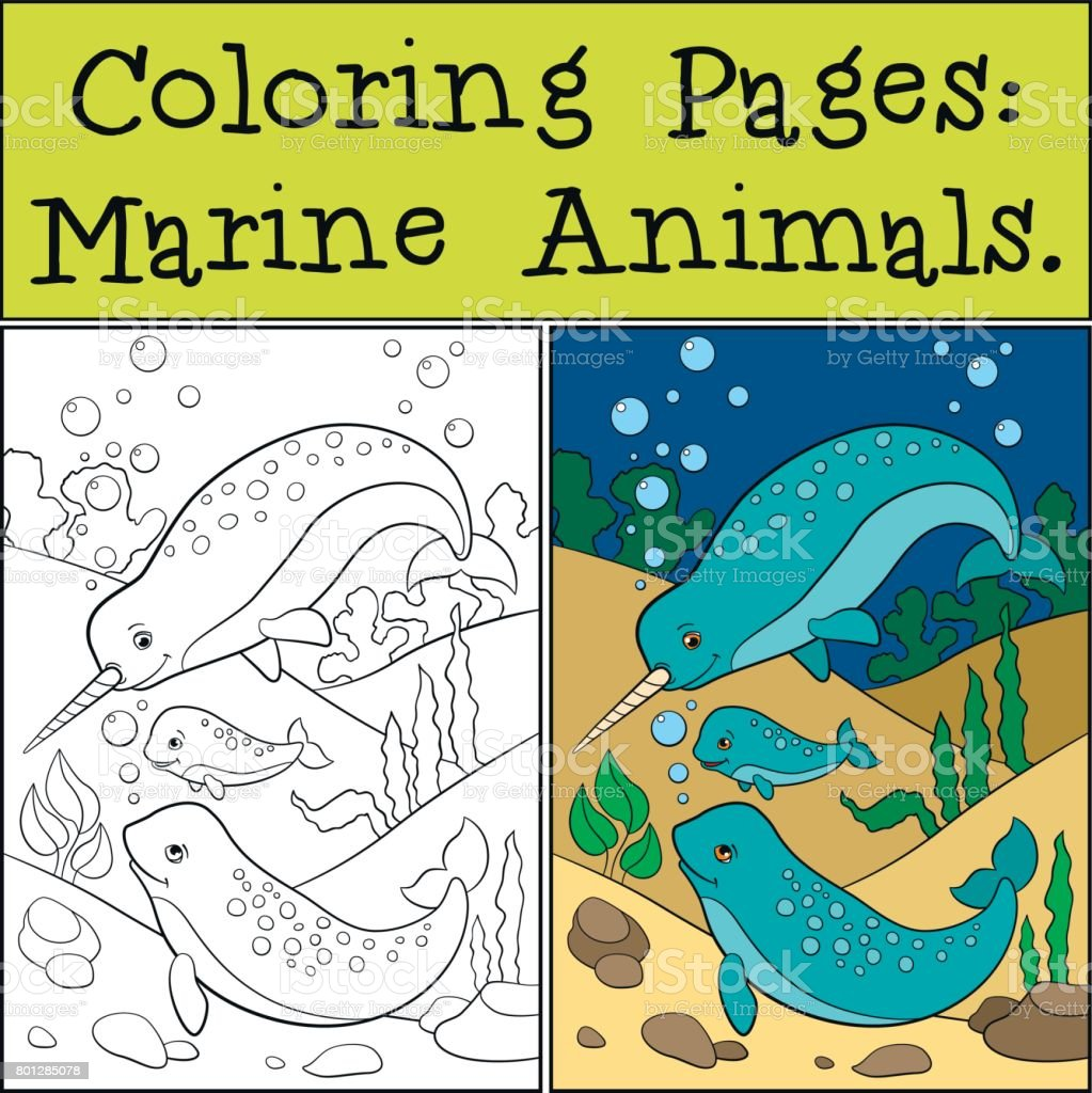 Coloring Pages Marine Animals Two Little Cute Narwhals Swim Royalty Free Stock