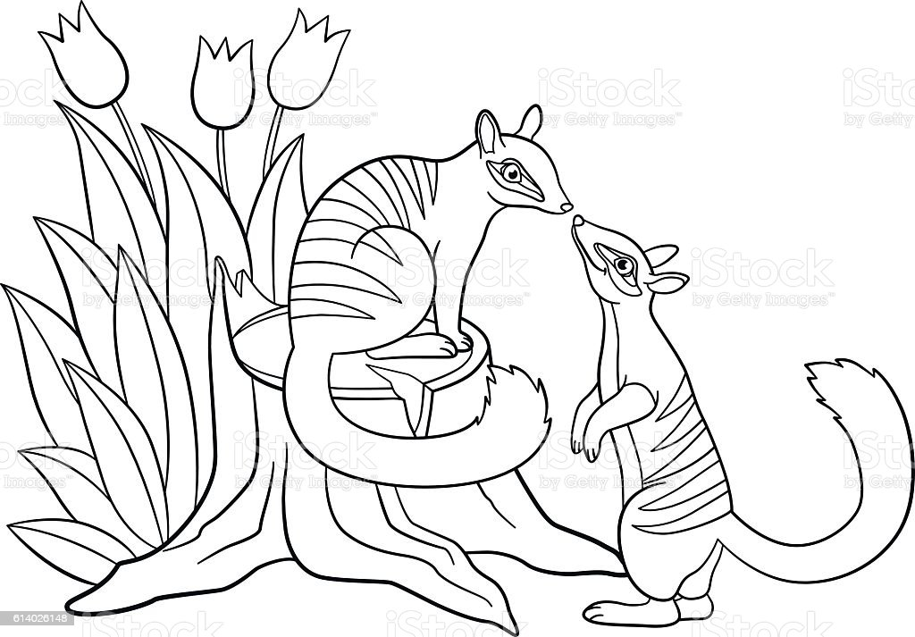Coloring Pages Two Little Cute Numbats Look At Each Other stock