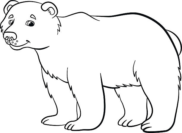 Bear Paw Drawing Pictures Clip Art Vector Images Illustrations