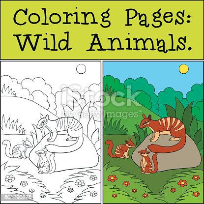 Coloring Pages Wild Animals Little Cute Numbat On The Log stock