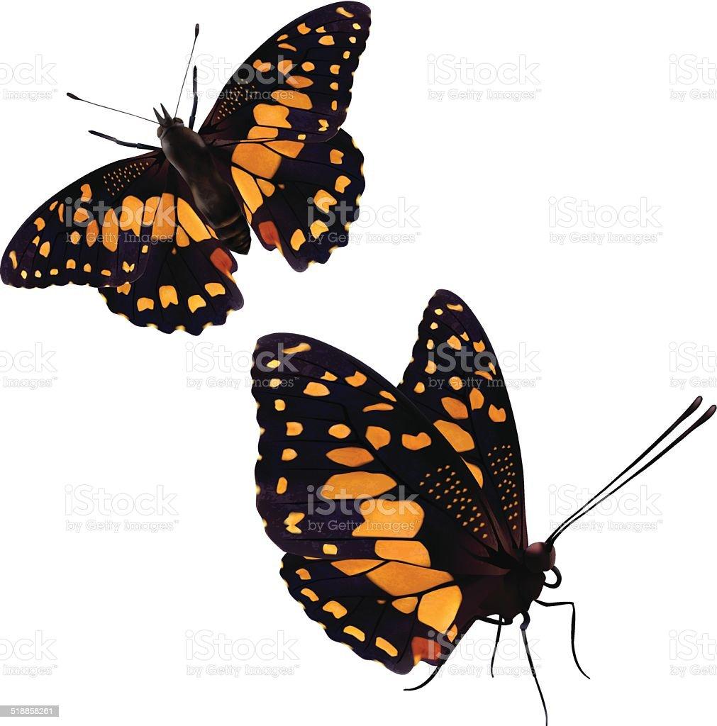 Common Lime Butterfly - Vector Illustration vector art illustration