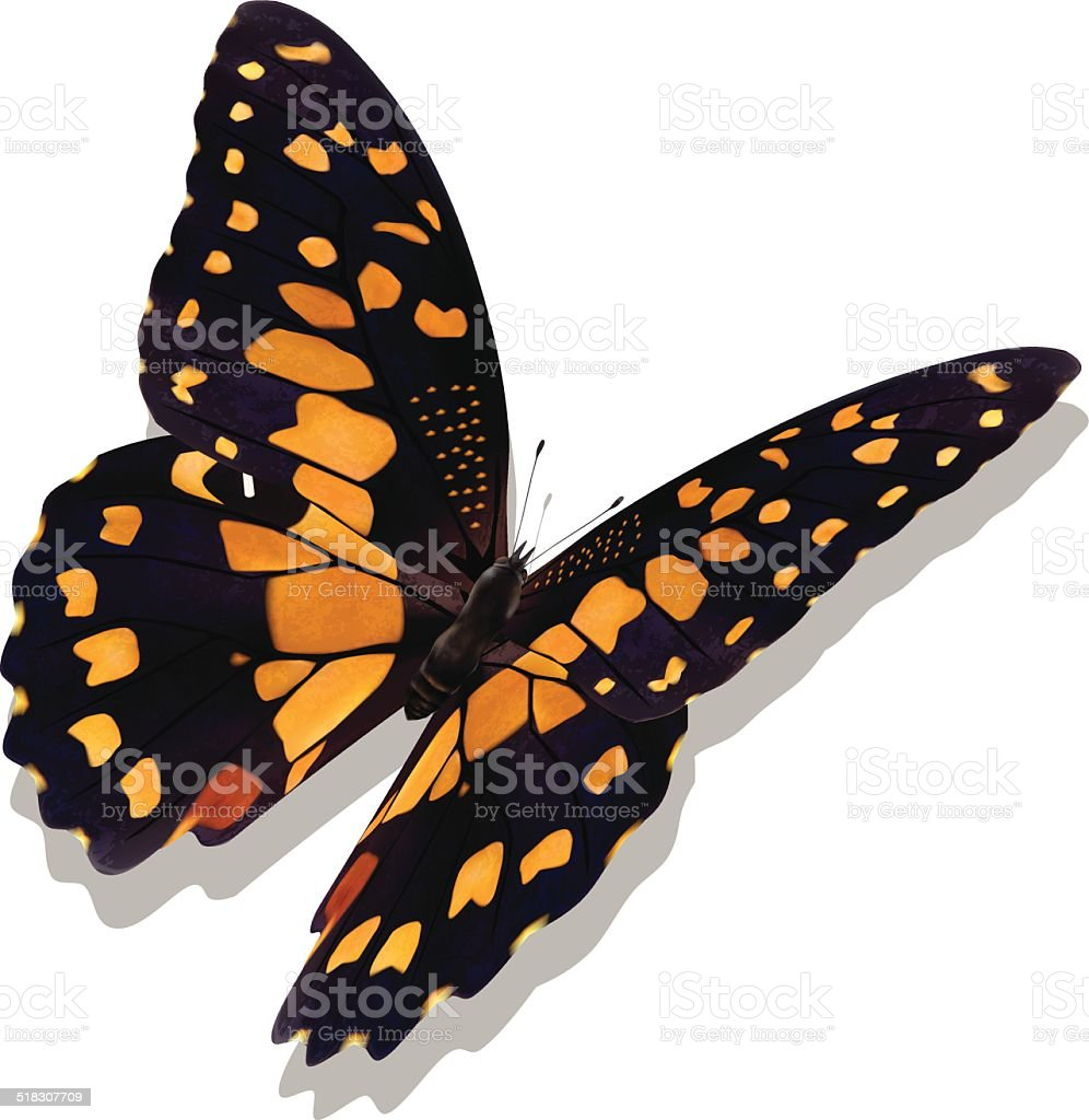 Common Lime Butterfly - Vector vector art illustration
