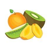 Composition of juicy apricot and kiwi. Ripe vector kiwifruit   fruits