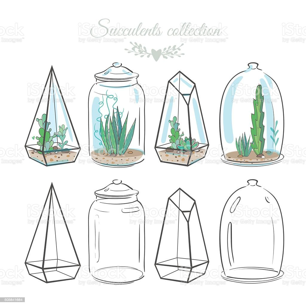 compositions with succulents vector art illustration