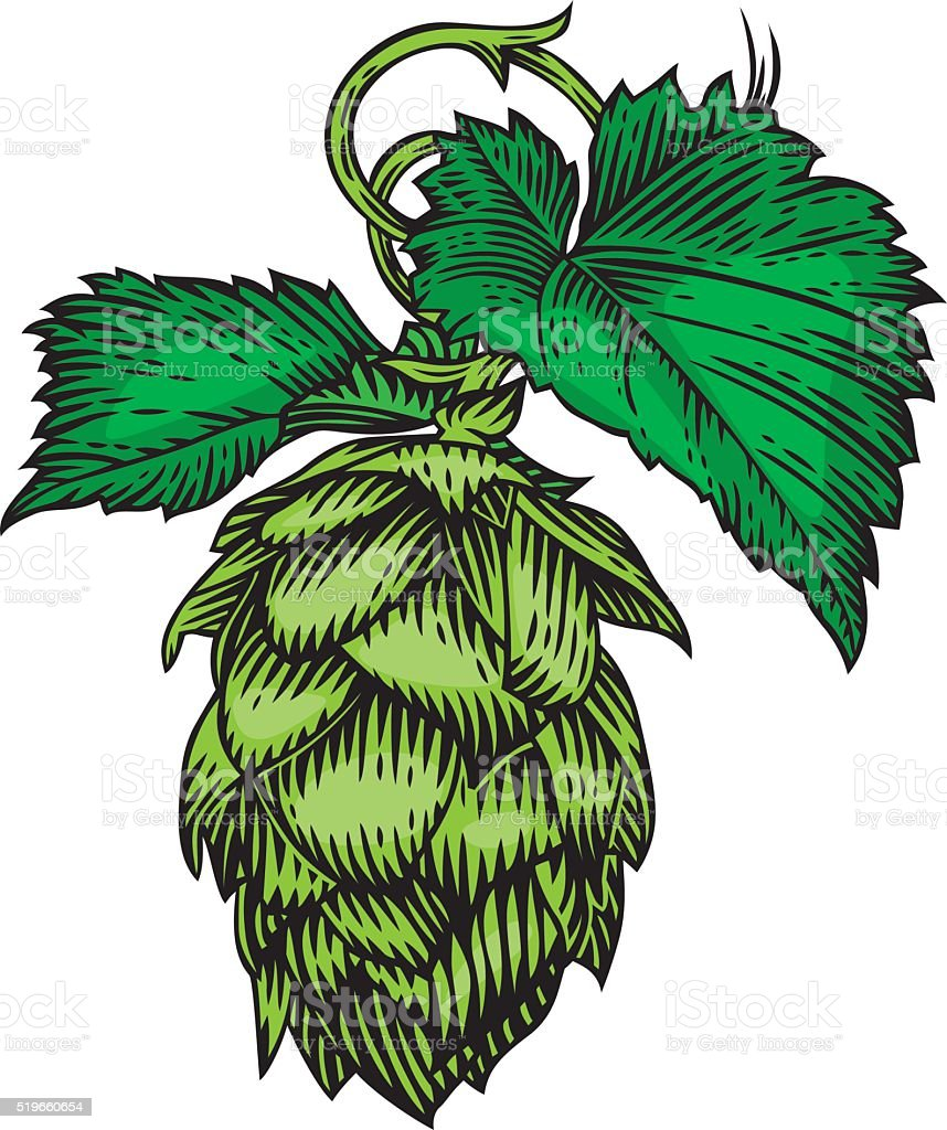 Cone and leaves of hops vector art illustration