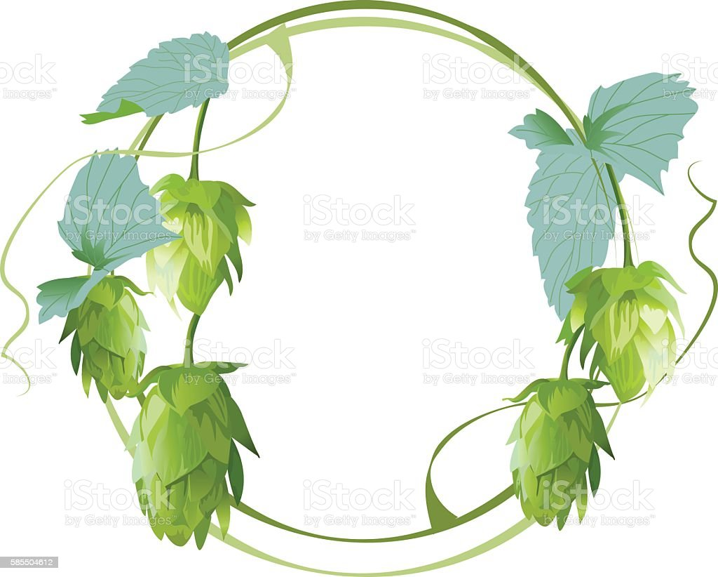 Cones and leaves of hop vector art illustration