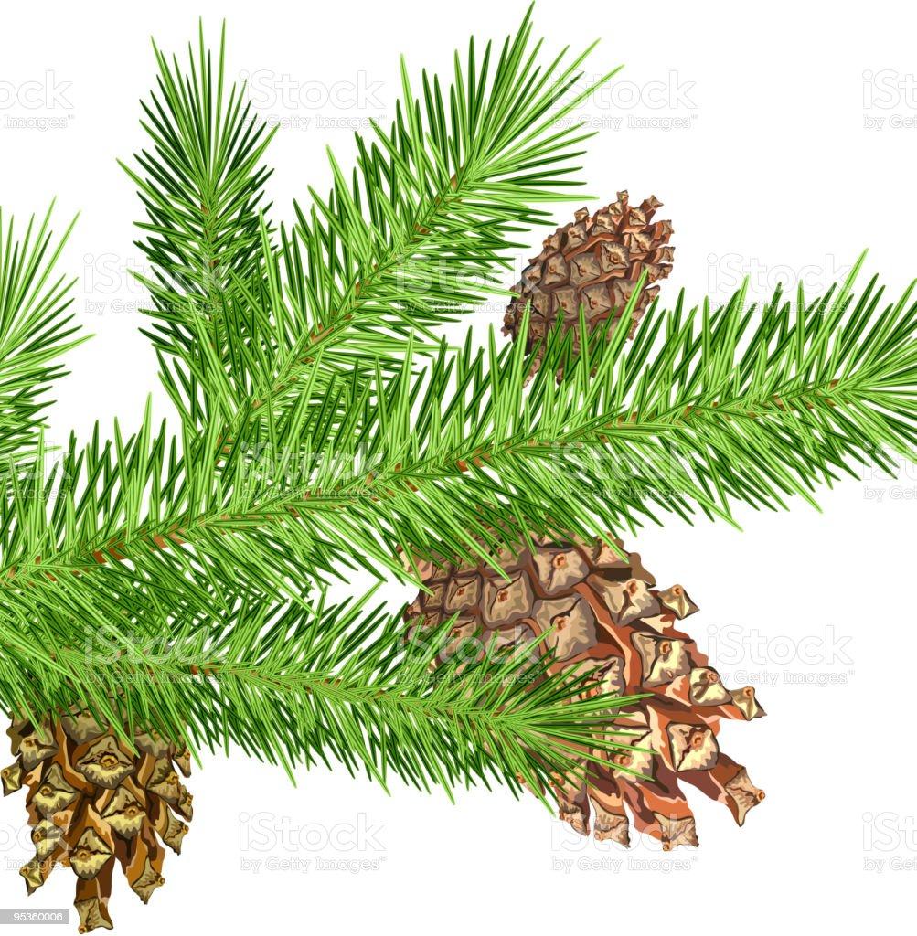 Cones on branch royalty-free stock vector art