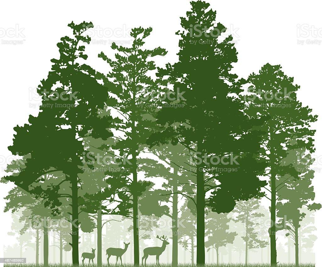 Conifer forest and deer family vector art illustration