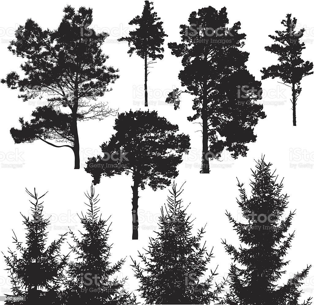 Conifer tree royalty-free stock vector art