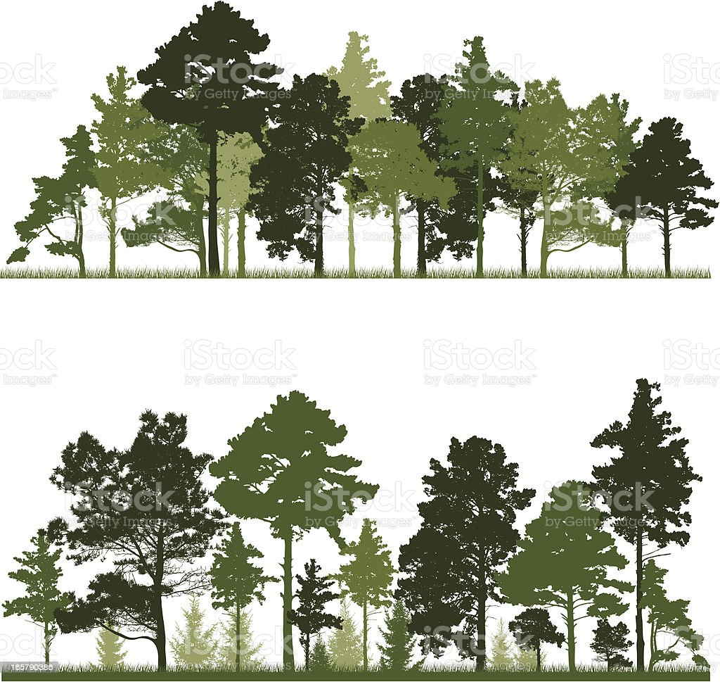 Conifer trees forest vector art illustration