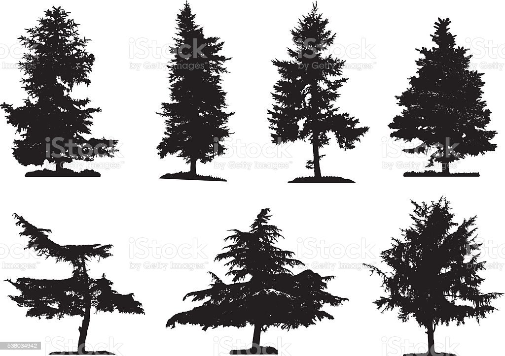Coniferous Trees Silhouettes vector art illustration