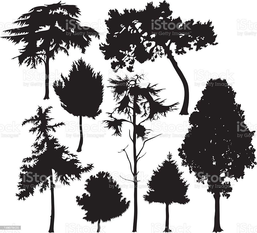 coniferous trees vector art illustration