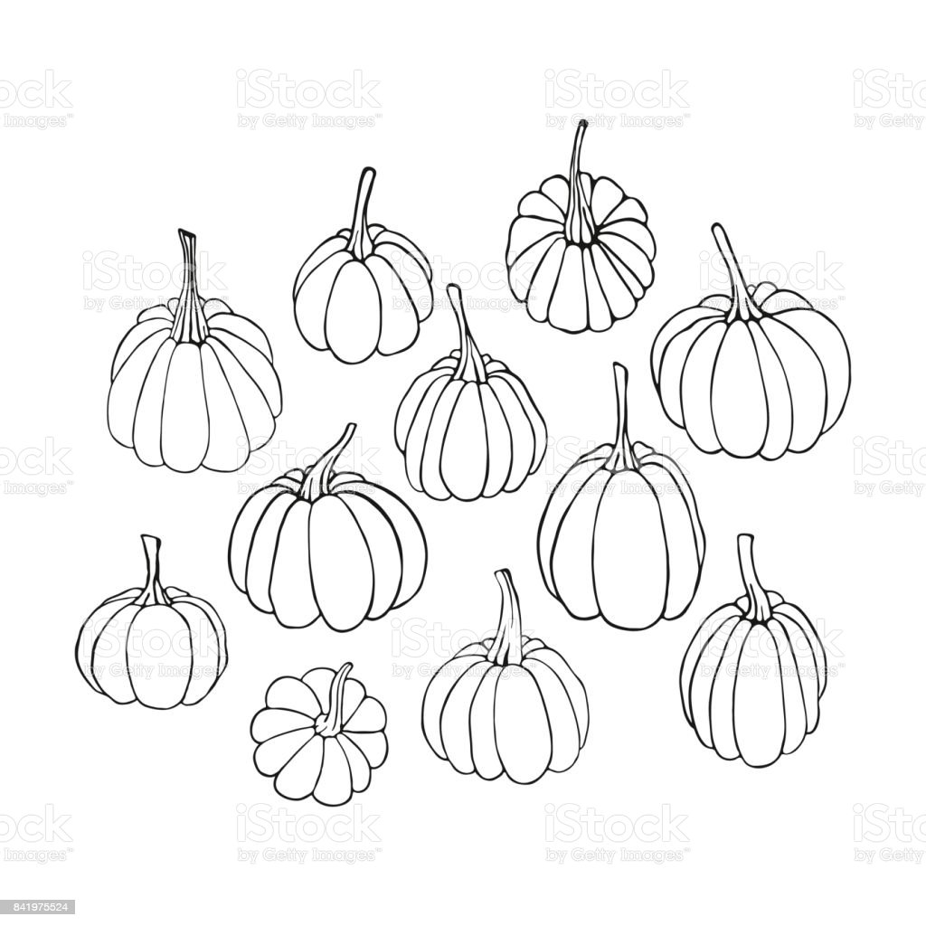 Uncategorized Drawing Pumpkins contour drawing pumpkins sketch stock vector art 841975524 istock royalty free art