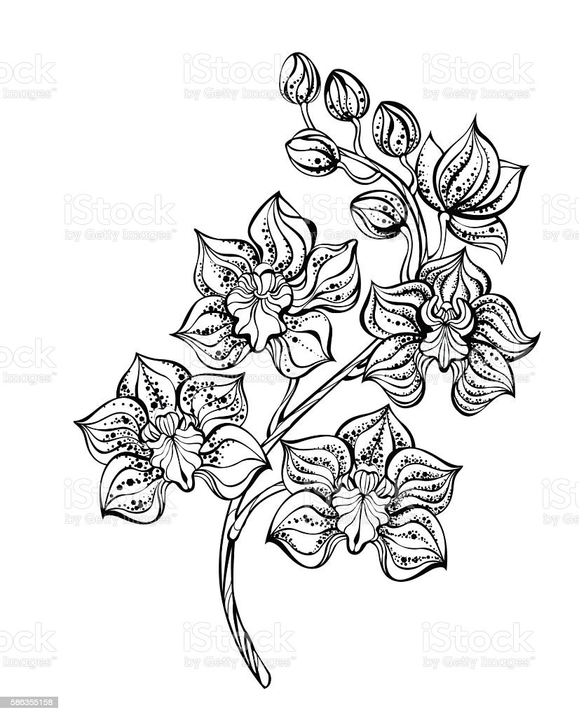 Contour orchid vector art illustration