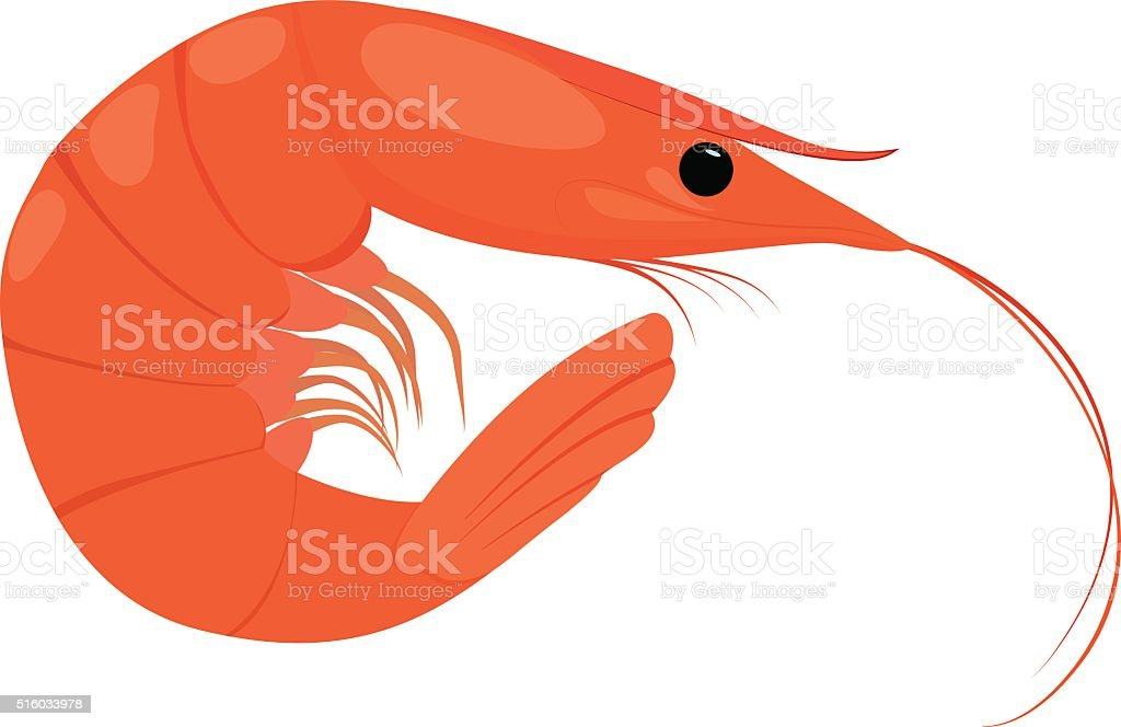 Cooked shrimp on white background vector art illustration
