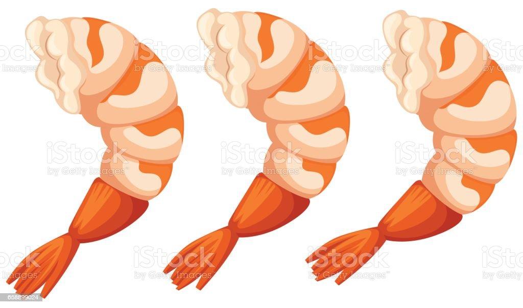 Cooked shrimps on white background vector art illustration