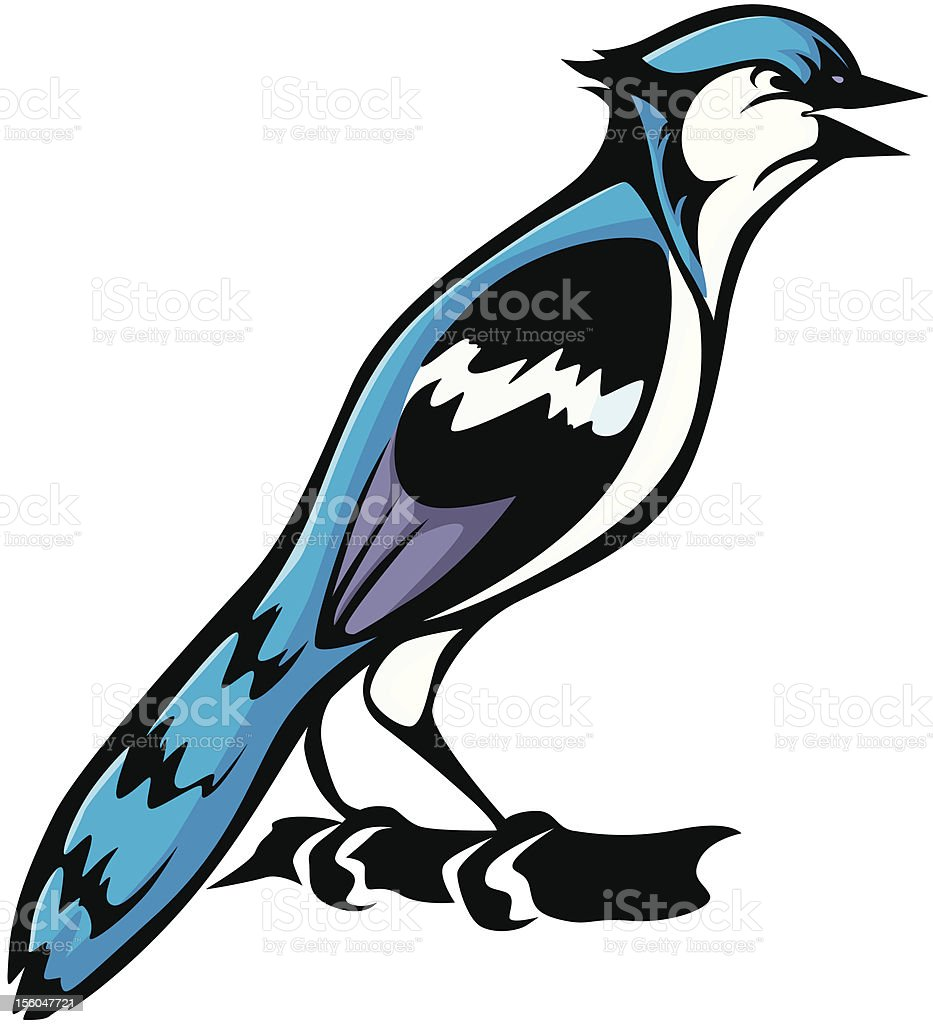 Cool Blue Jay Bird Illustration royalty-free stock vector art