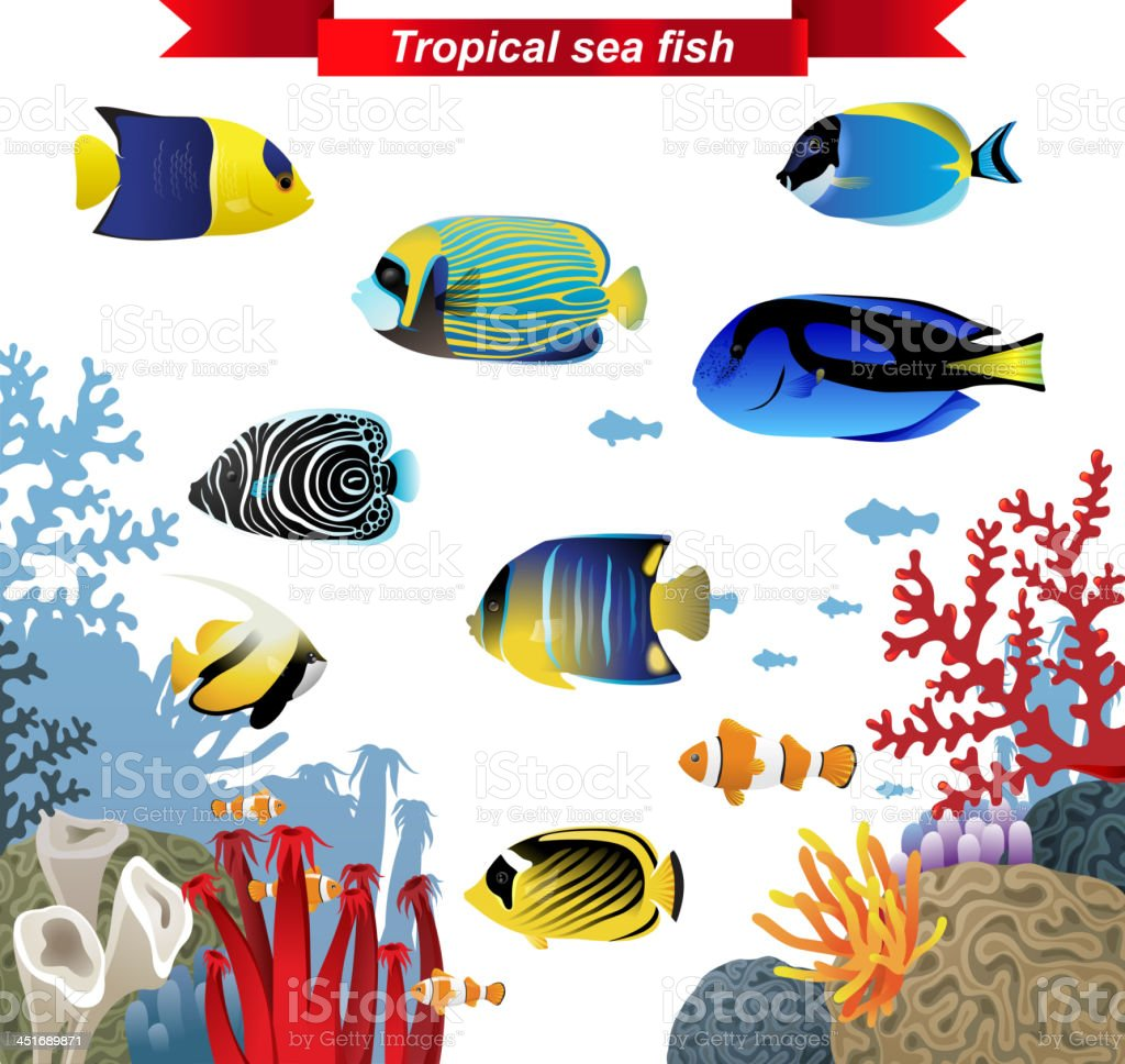 Coral reef fishes vector art illustration