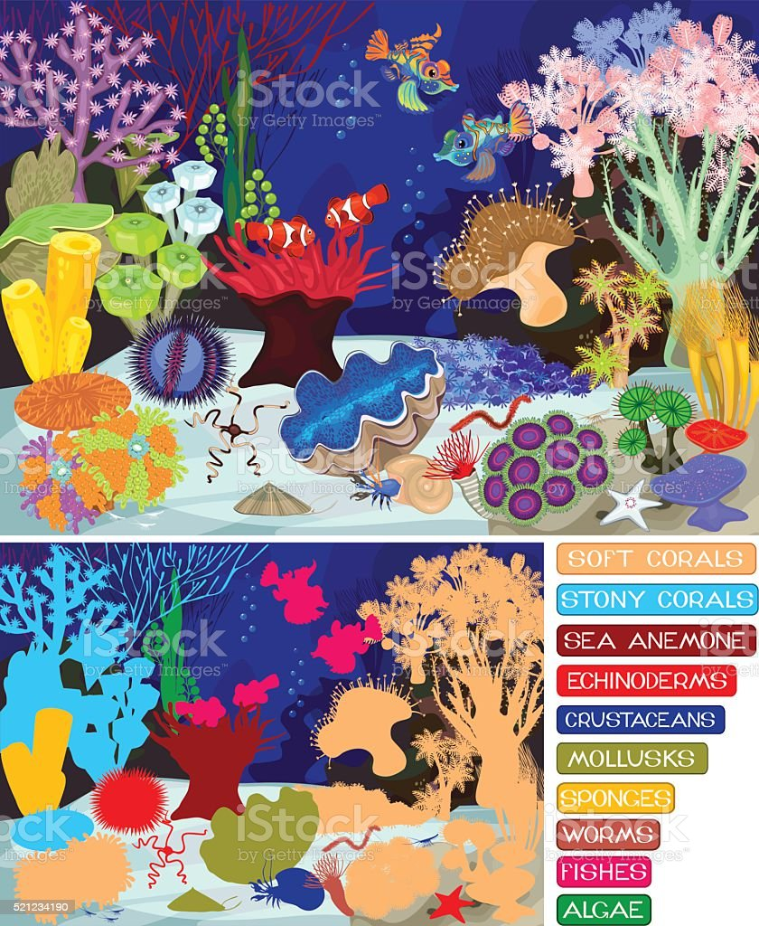 Coral reef with soft and hard corals. Ecosystem. vector art illustration