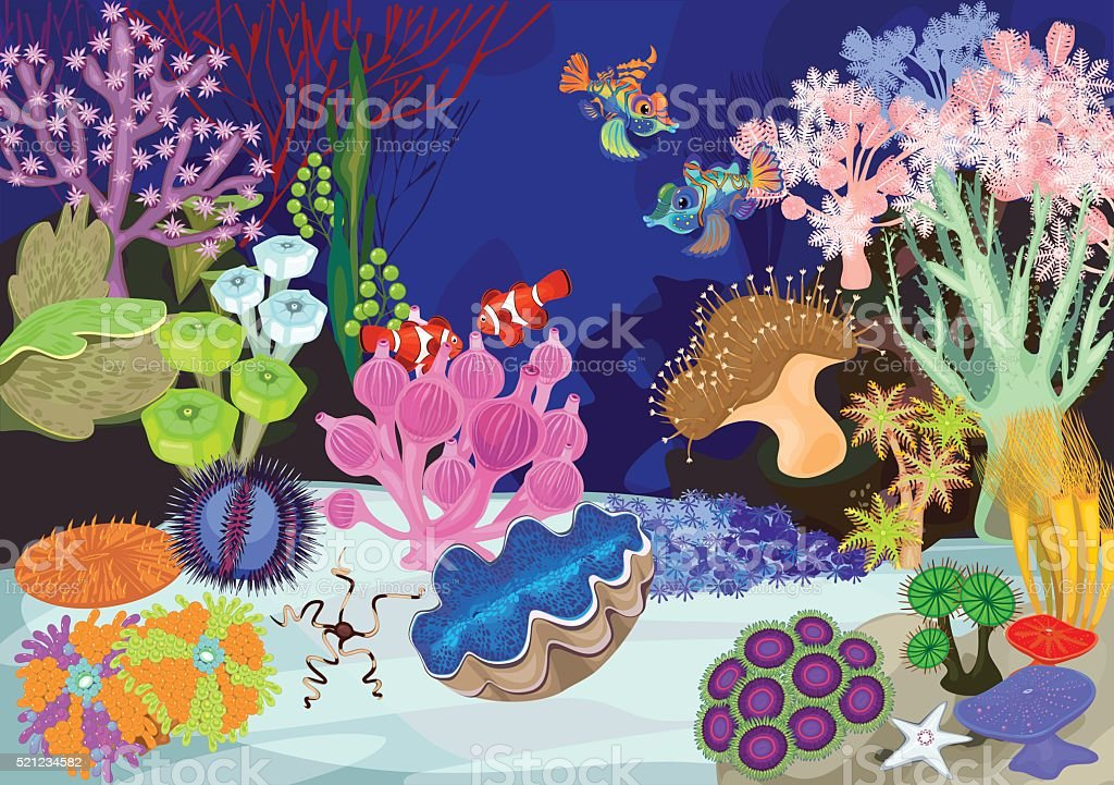 Coral reef with soft and hard corals. Ecosystem vector art illustration
