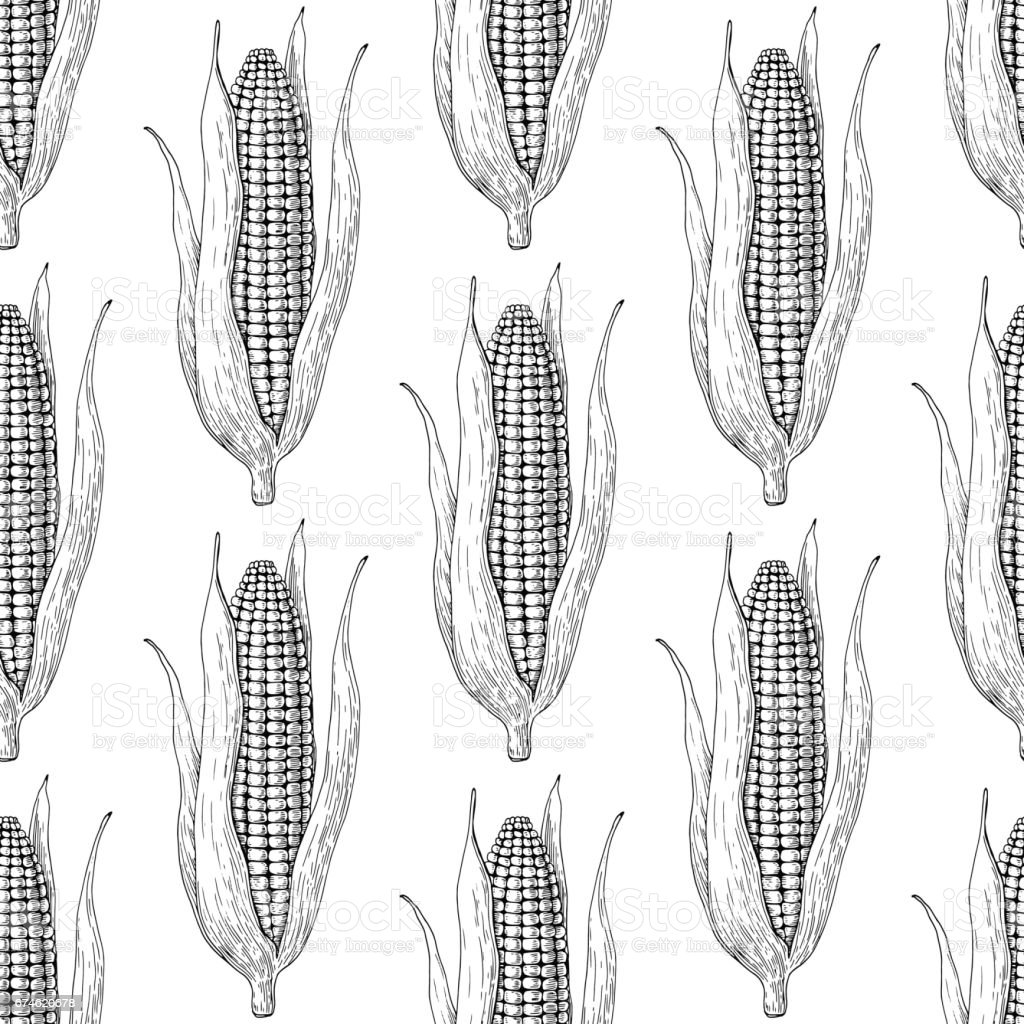 Corn cob hand drawn vector seamless pattern. Isolated Vegetable engraved style wallpaper. vector art illustration