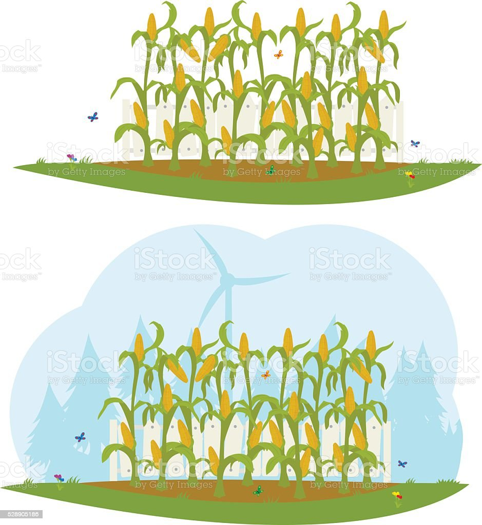 corn field behind a white fence. vector art illustration