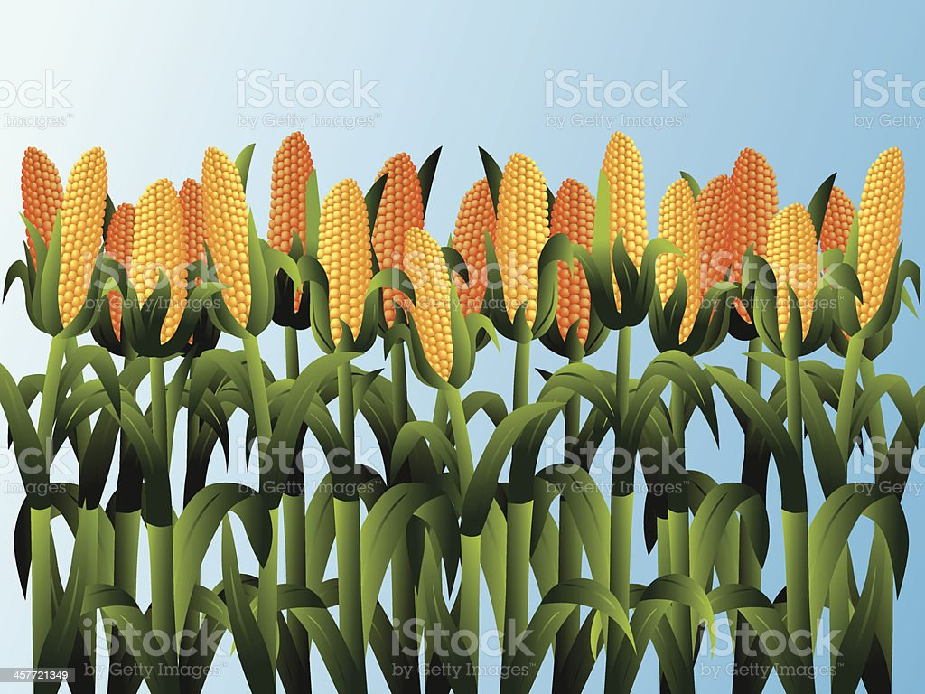corn field vector art illustration