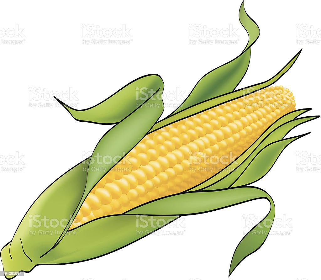 Corn plant on white vector art illustration