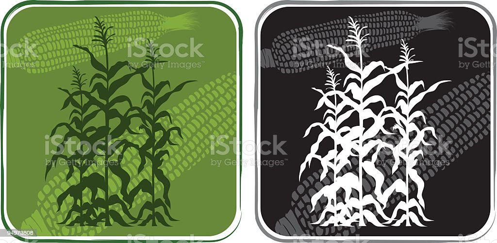 Corn Stalks Icon royalty-free stock vector art