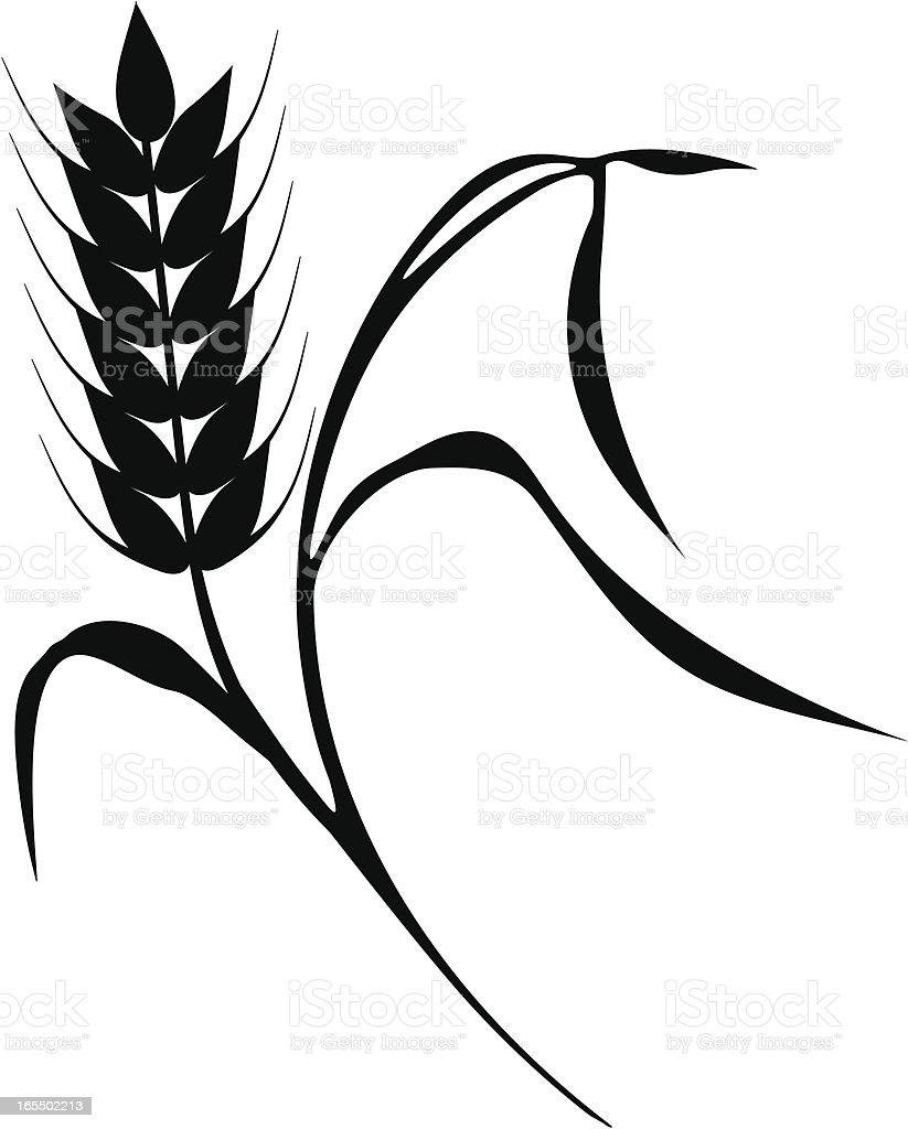 Corn royalty-free stock vector art
