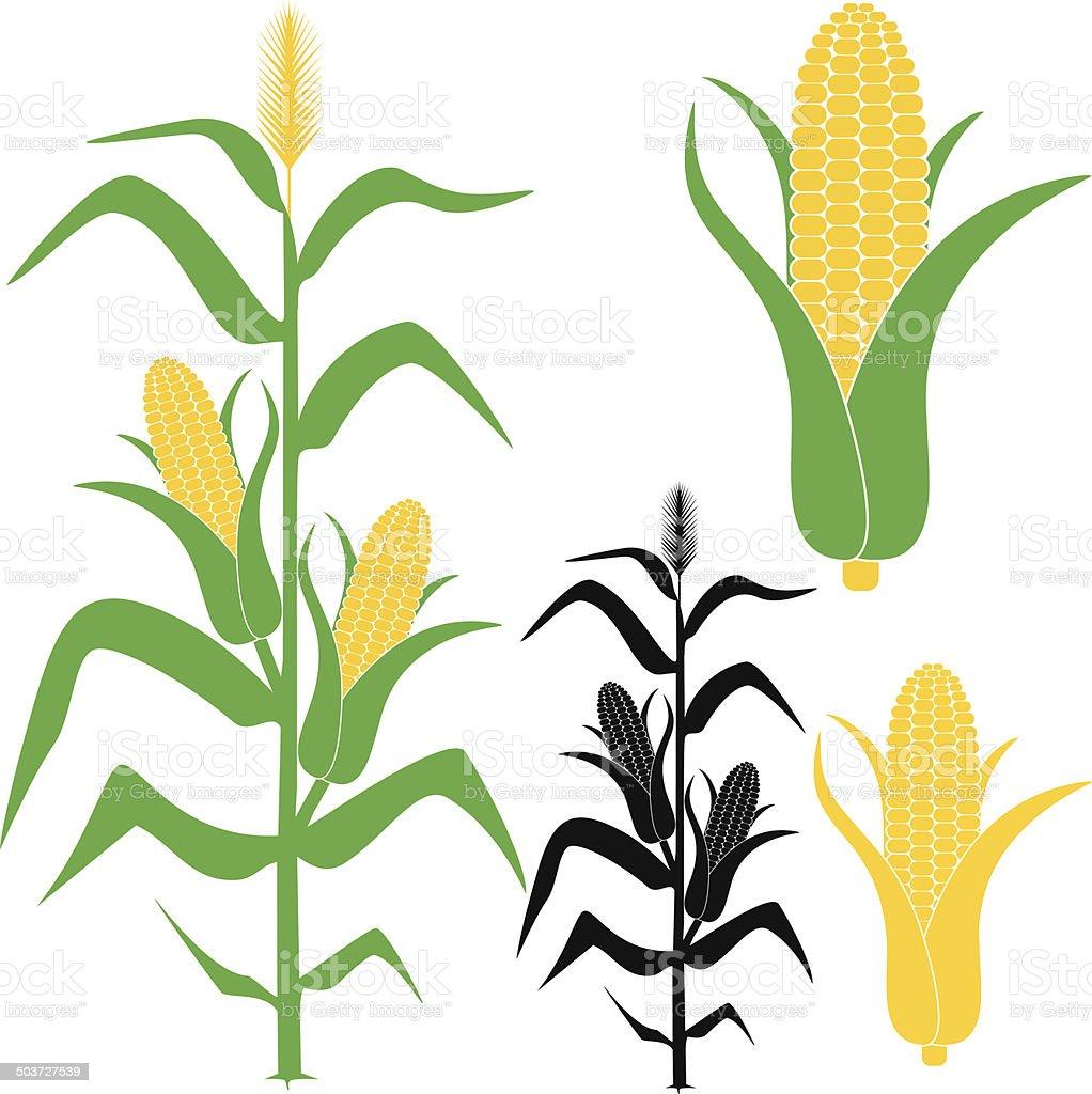 corn clip art  vector images   illustrations istock Corn Crop Clip Art ear of corn clipart black and white
