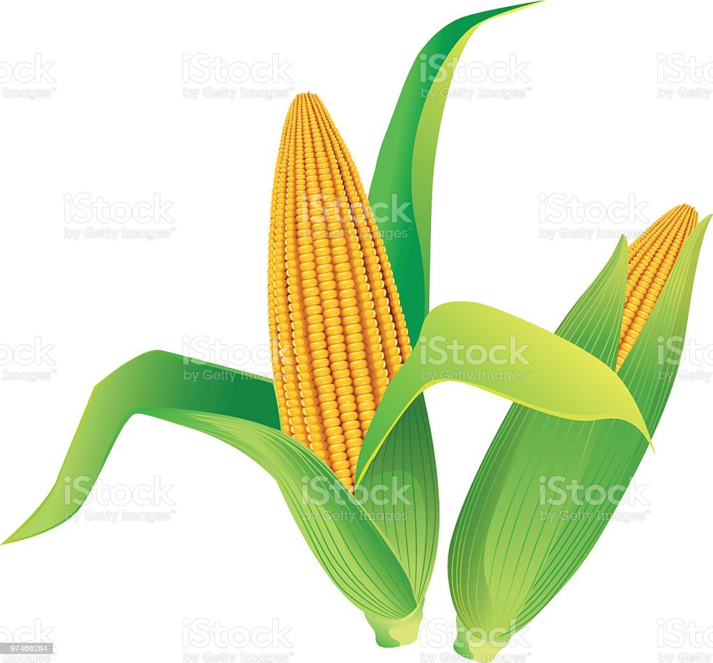 Corn royalty-free stock vector art