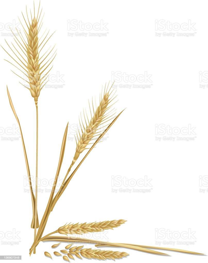 Corner Wheat Element royalty-free stock vector art