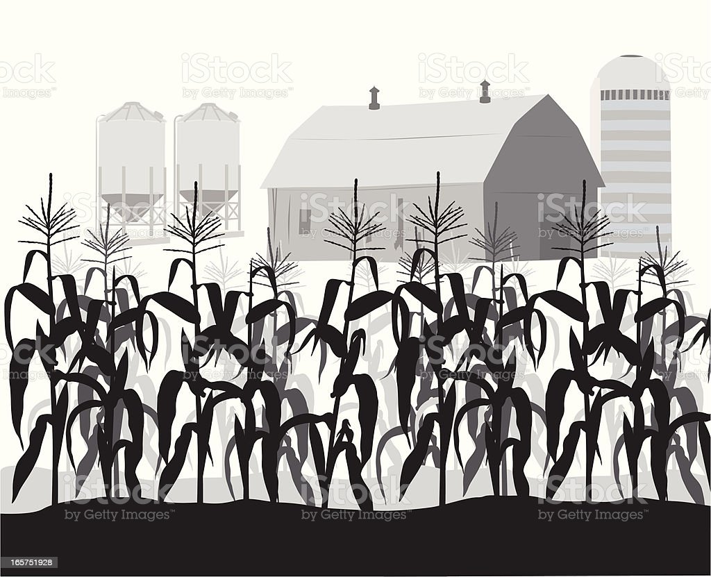 CornField Vector Silhouette royalty-free stock vector art